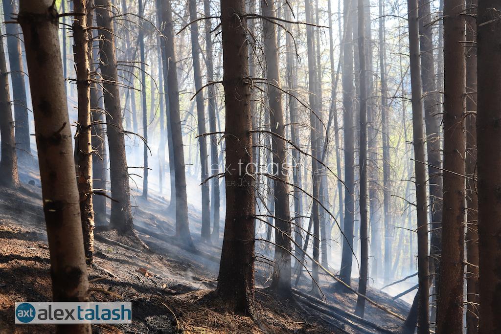 Waldbrand im Hagener Süden