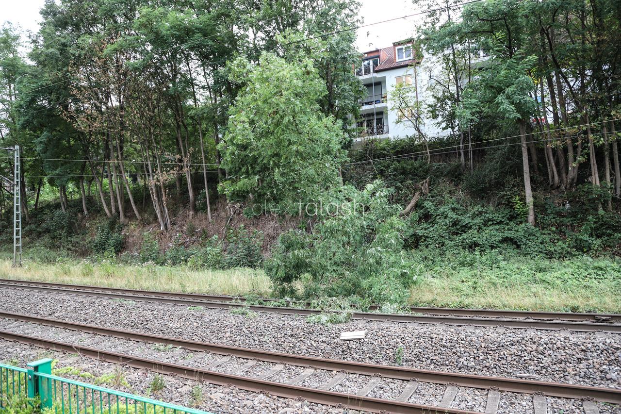 Feuerwehr evakuiert Zug: Baum stürzt auf Oberleitung